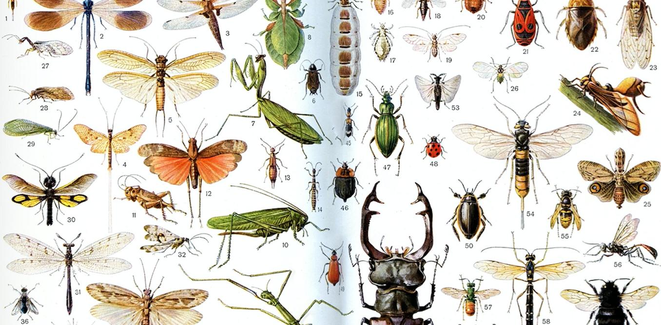 Les insectes vont-ils sauver le monde ?
