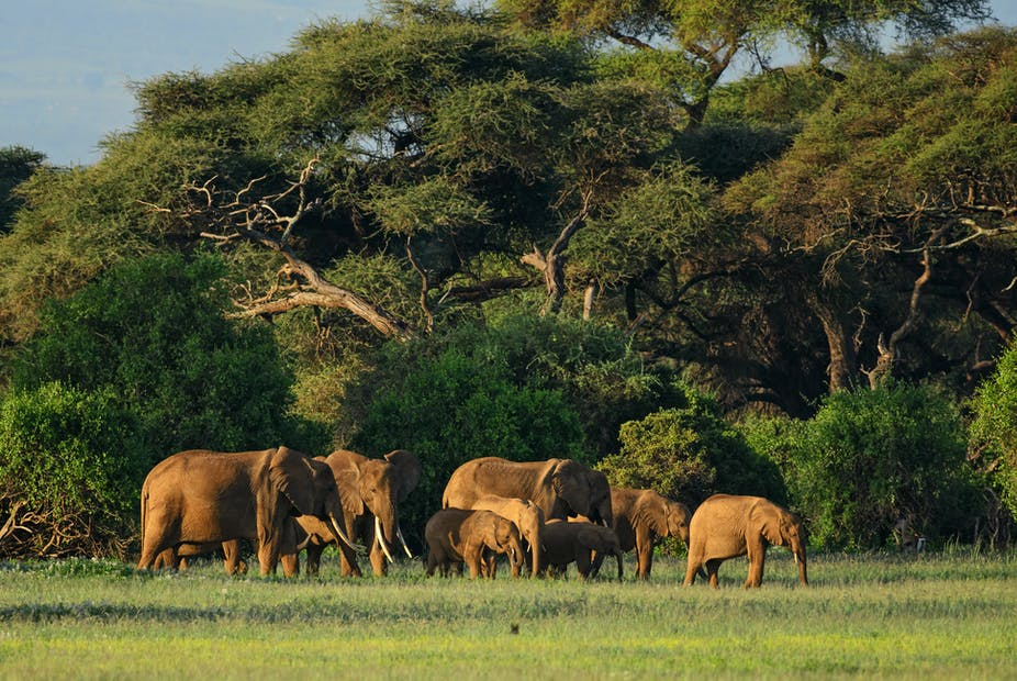 South Sudan's humanitarian crisis: wildlife is also in the