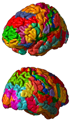 mapping the brain scientists define 180 distinct regions but