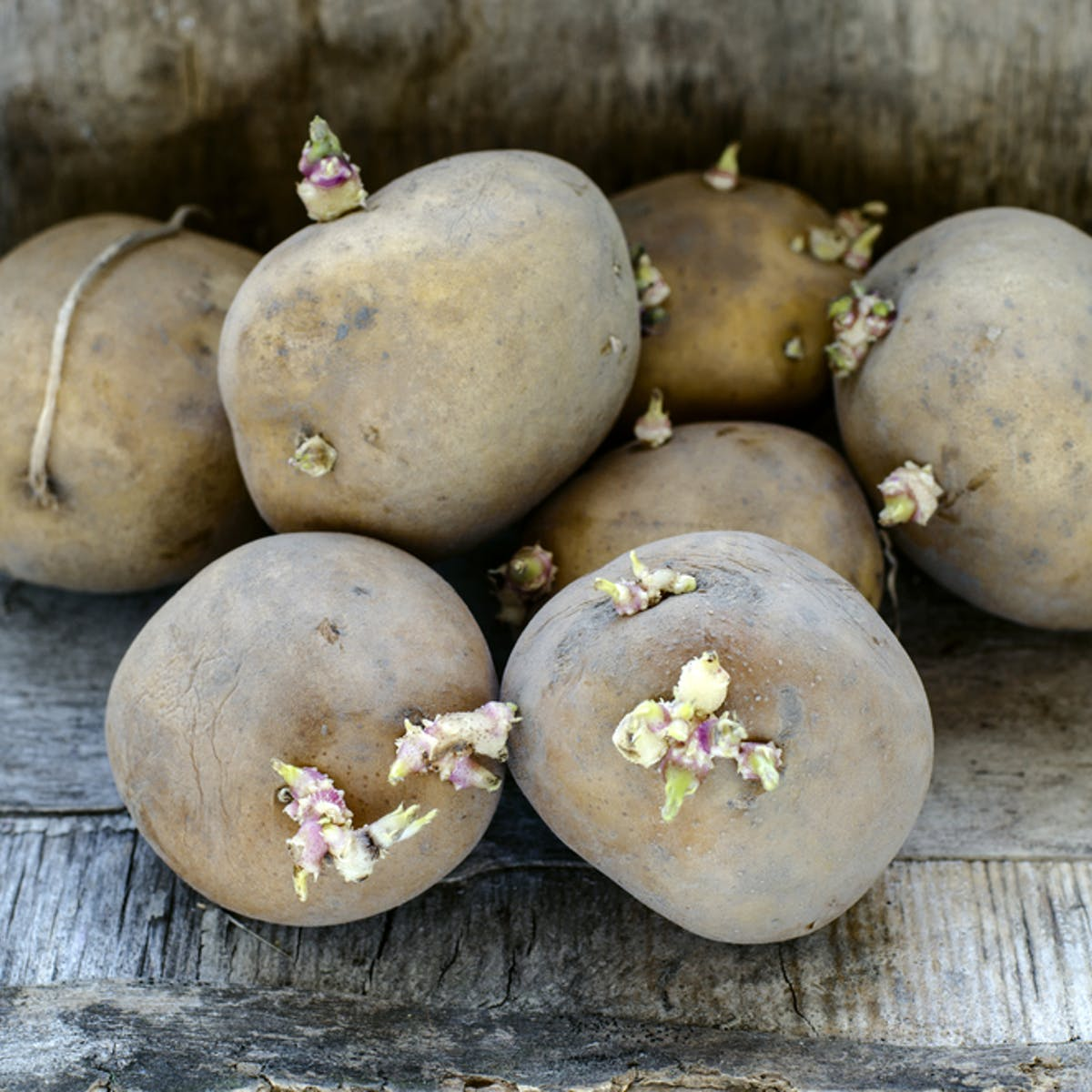 Can you really be poisoned by green or sprouting potatoes?