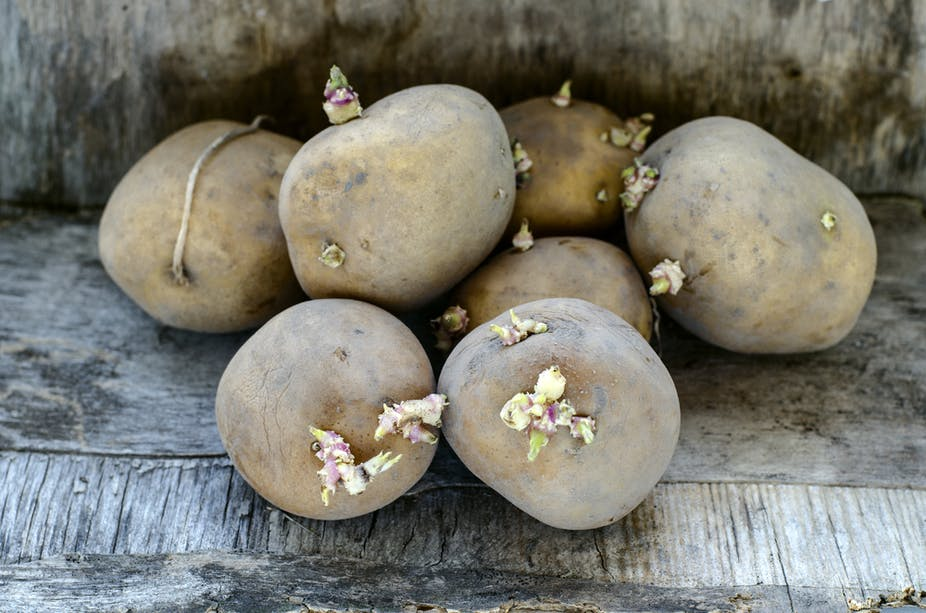 Can You Really Be Poisoned By Green Or Sprouting Potatoes