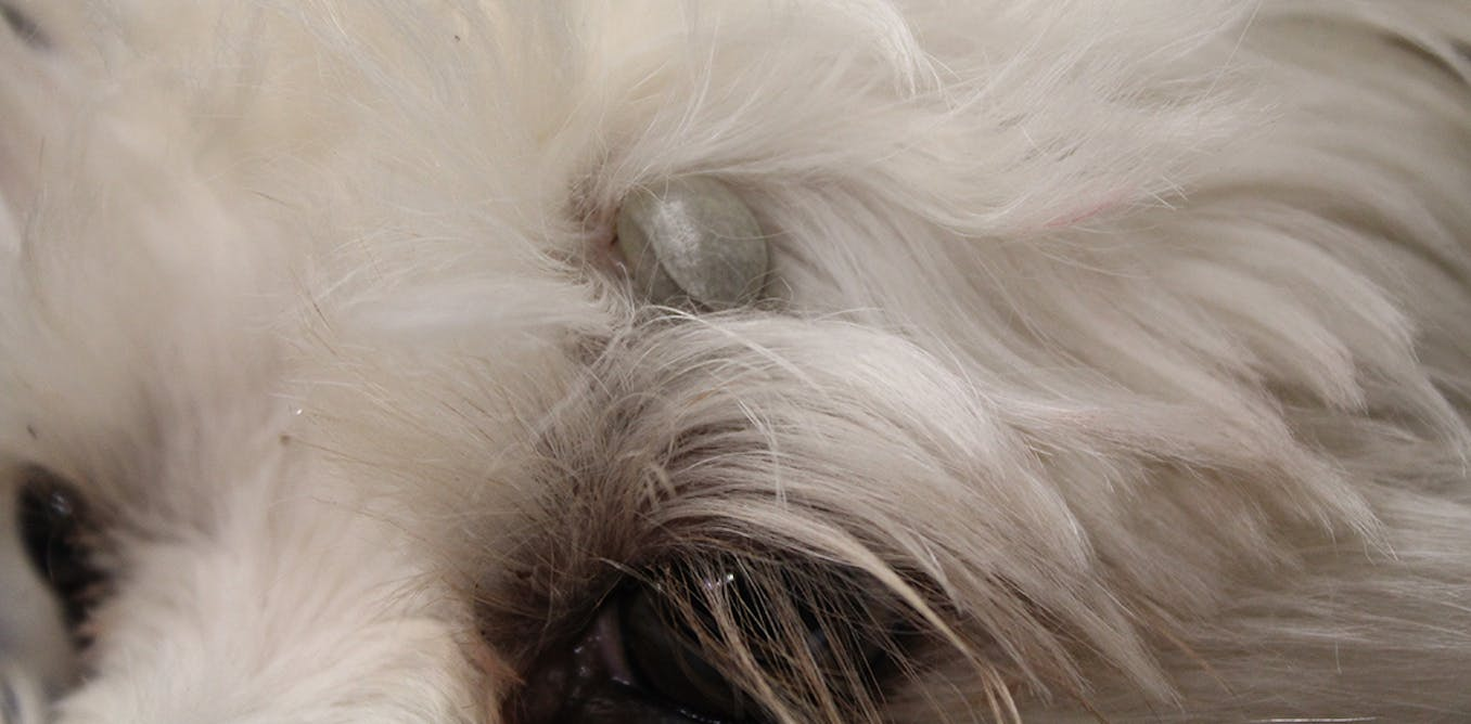 Ticked Off Let S Stop Our Dogs And Cats Dying Of Tick