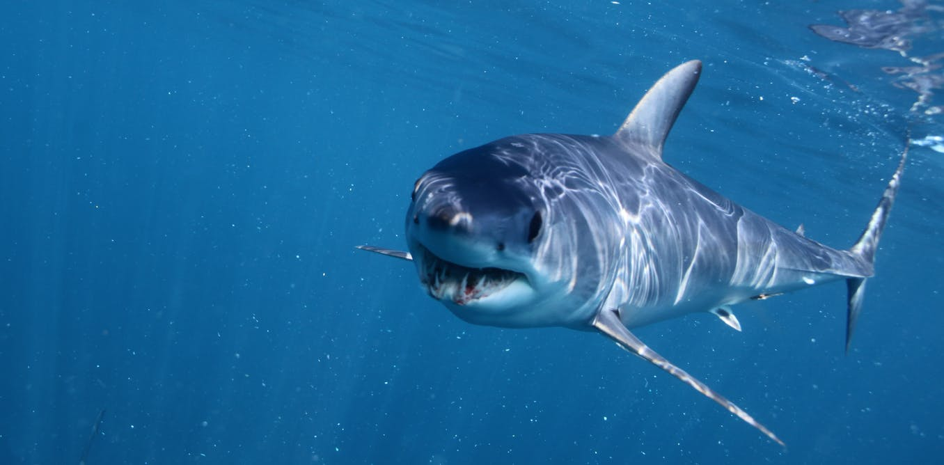 stop freaking out about sharks in british waters let s welcome them
