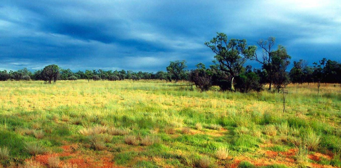 tropical savanna information A savanna or a grassland biome is home to a number of natural resources, including water, livestock and lumber in tropical savannas, and coal, oil, wheat, gas, oats and livestock in temperate.