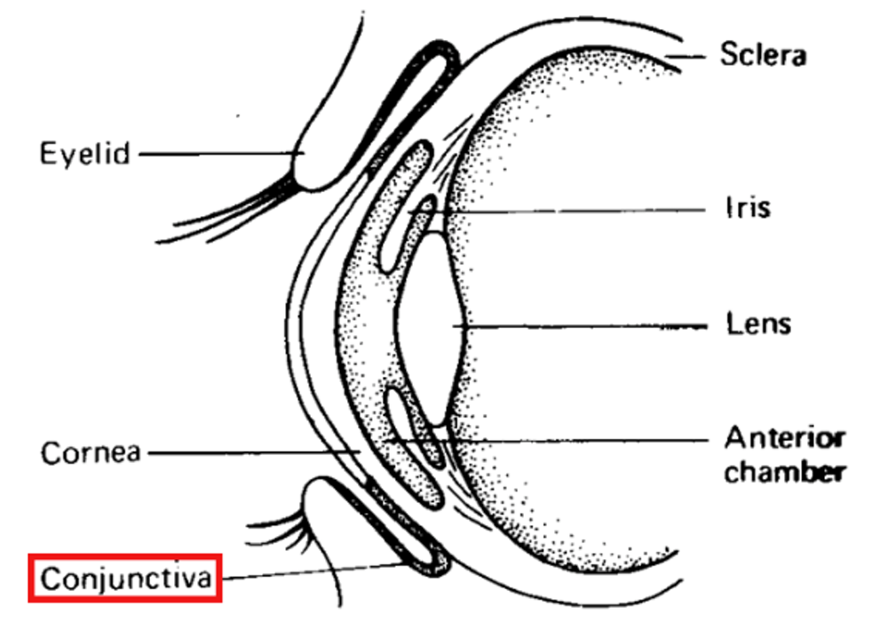 Explainer  what is conjunctivitis and how did I get it