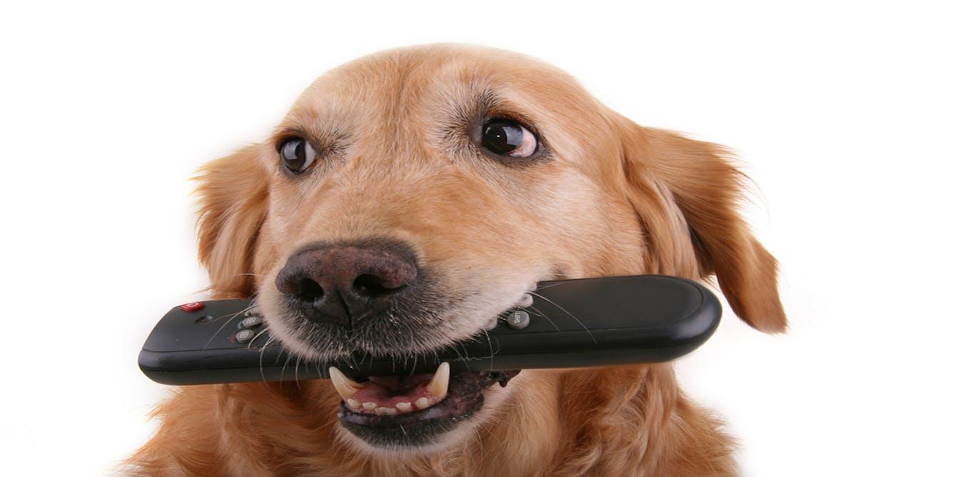 Image Result For Free Online Dog
