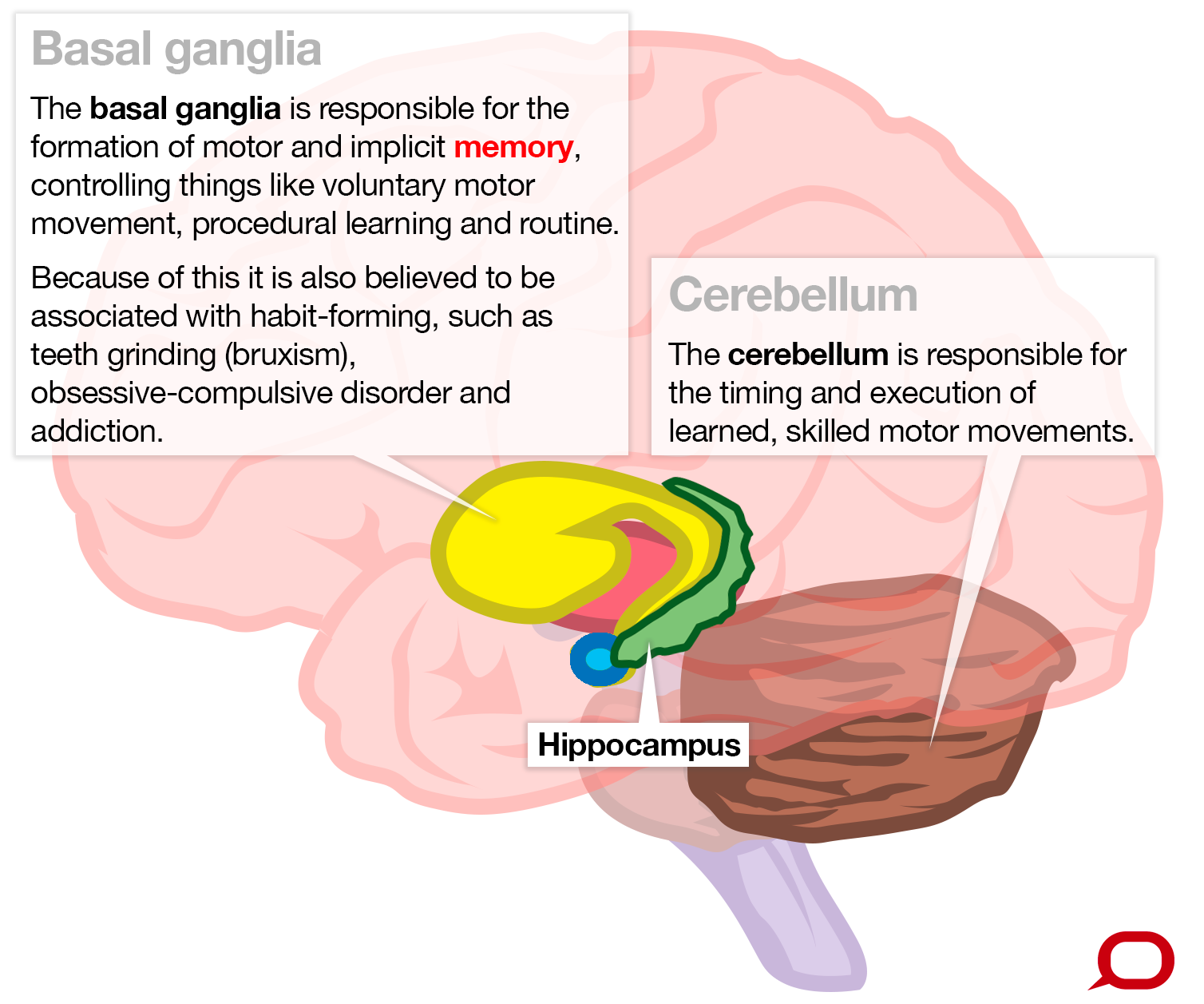 We're capable of infinite memory, but where in the brain is it ...