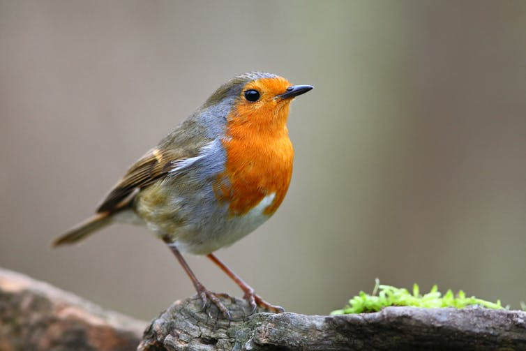 We made an app to identify bird sounds – and learned something