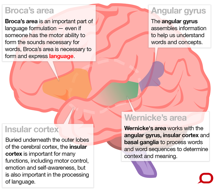 What Brain Regions Control Our Language And How Do We Know This