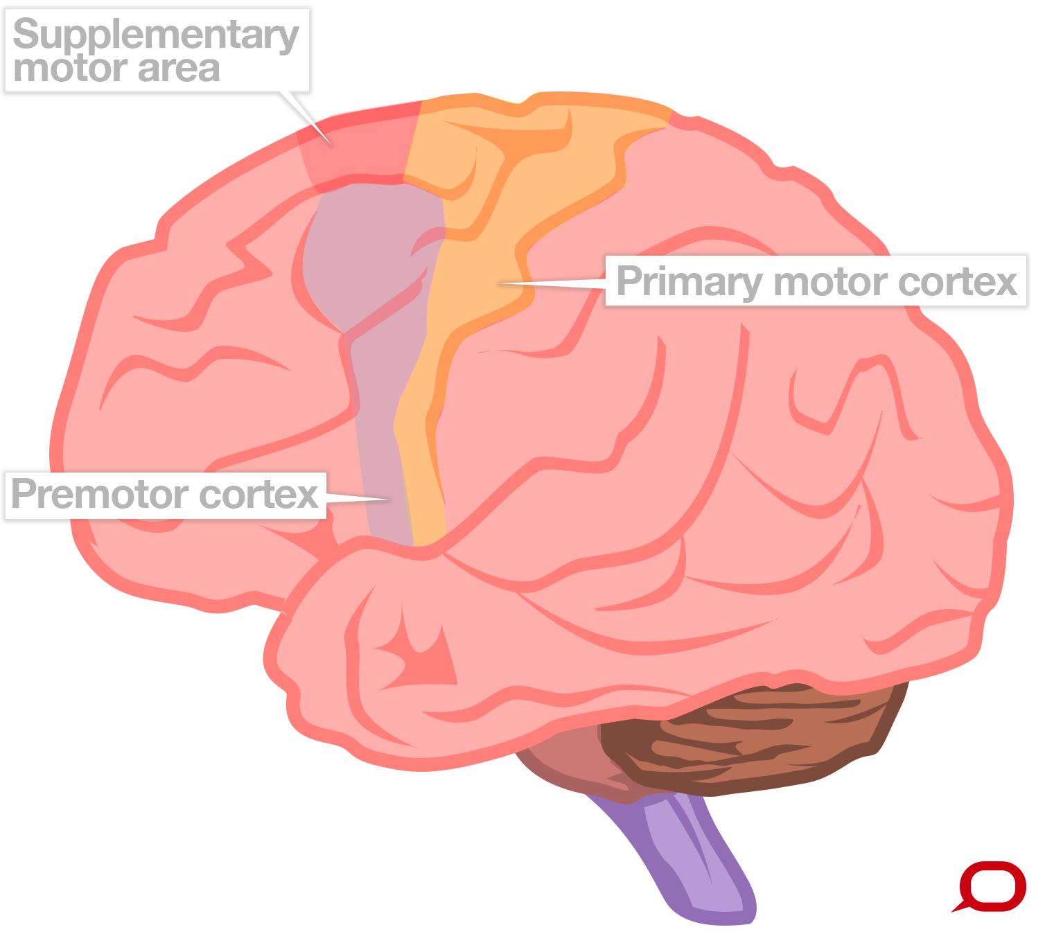 Simple Brain Diagram Showing W Motion - Auto Electrical Wiring Diagram •