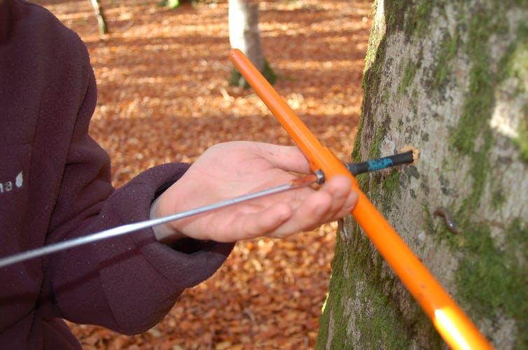 La dendrochronologie l art de lire dans les cernes des arbres - Arbre a carotte ...
