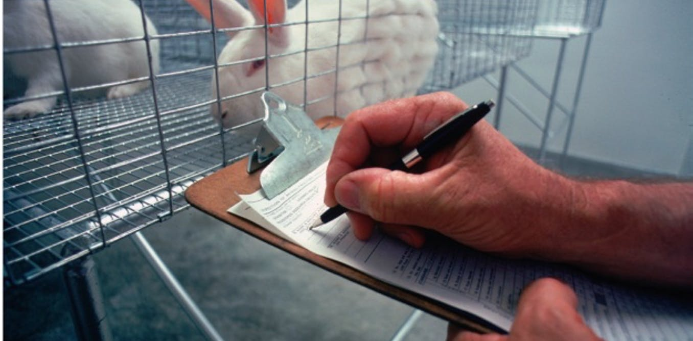 this paper talks about animal experiments Millions of animals are being used for experiments in the us each year those who support this legal practice say that it is for a good cause, implying that it is better to use animals than human beings for testing.