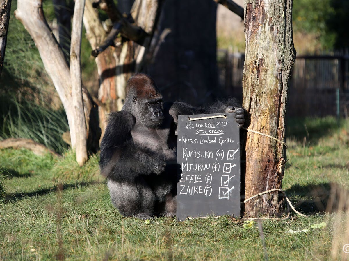 Zoos Aren T Meant To Be Maximum Security Prisons And Sometimes There Will Be An Escape