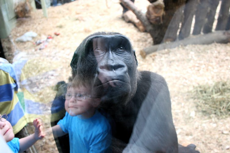 zoos necessary or not Dublin zoo: zoos a necessary evil - see 6,612 traveler reviews, 3,805 candid photos, and great deals for dublin, ireland, at tripadvisor.