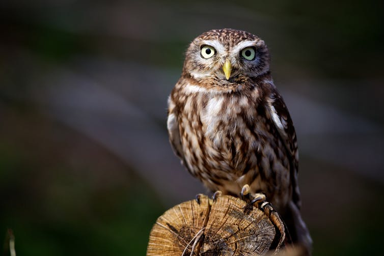 Night Owls May Face Special Challenges >> Health Check What Determines Whether We Re Night Owls Or Morning Larks