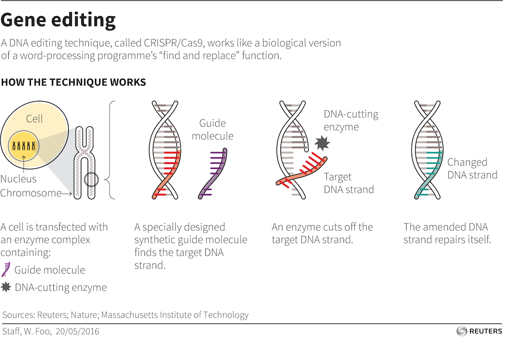 d10fda2176 CRISPR gene-editing controversy shows old ideas about East and West ...
