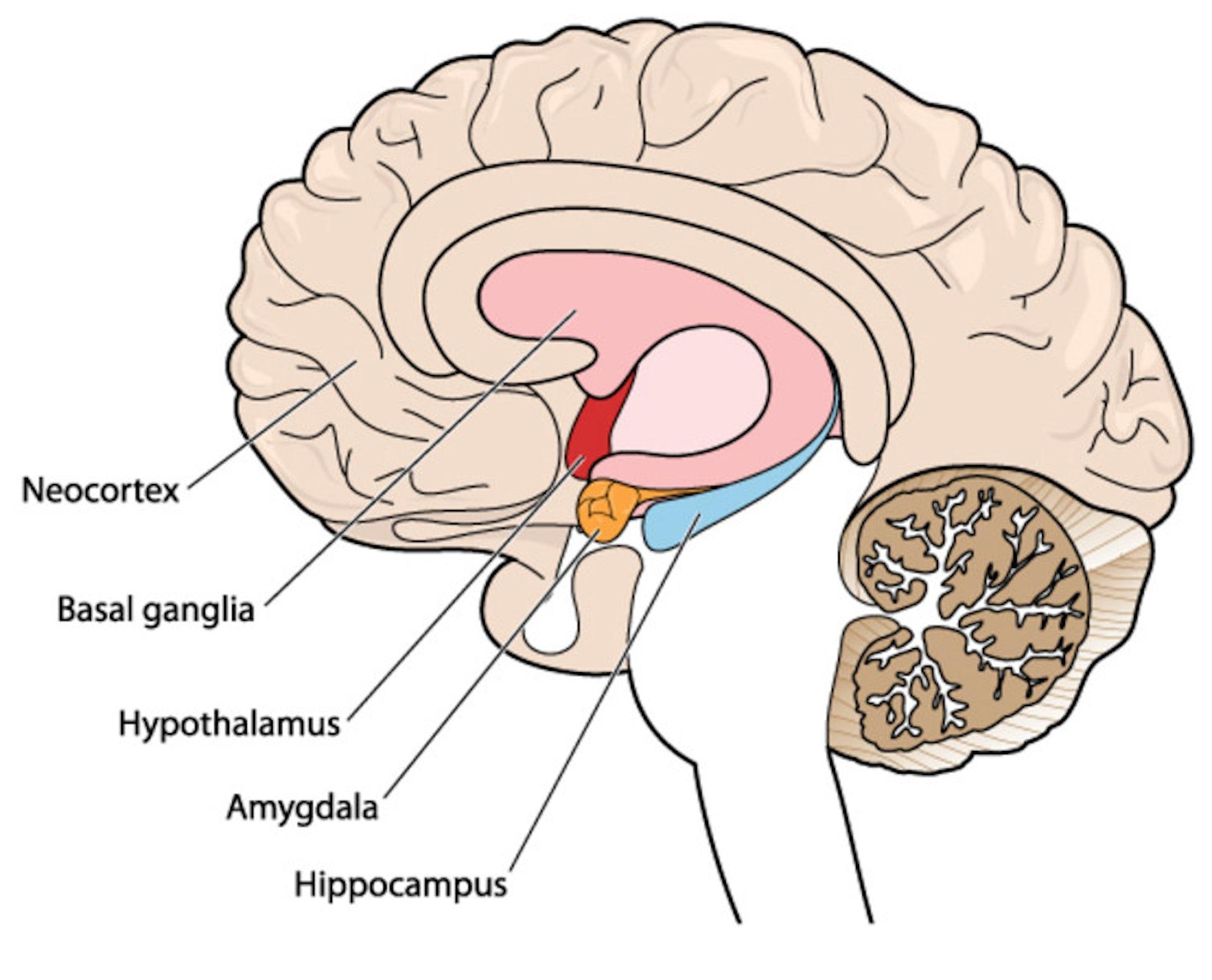 Simple Brain Diagram Blank   Machine Repair Manual