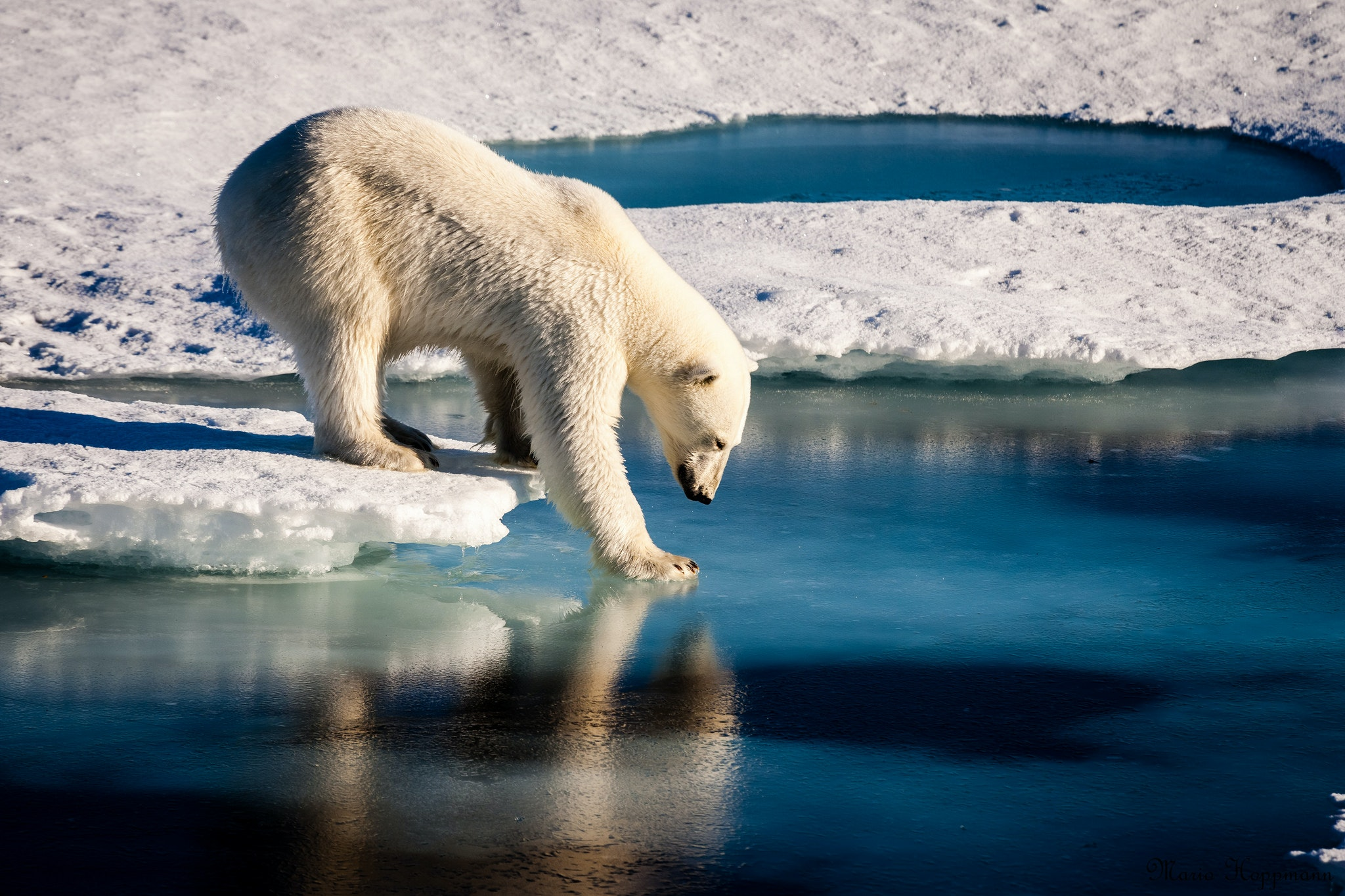 Arctic Sea Ice Dwindles to New Record Winter Low - Scientific American