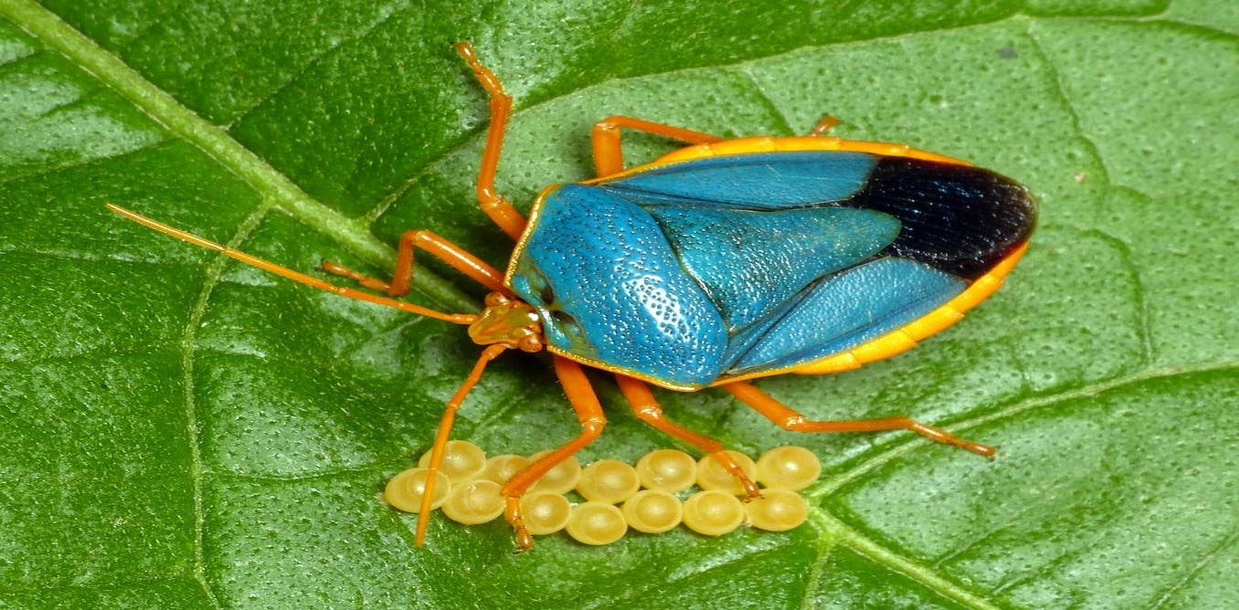 Entomology - Wikipedia  |Insecta Insects