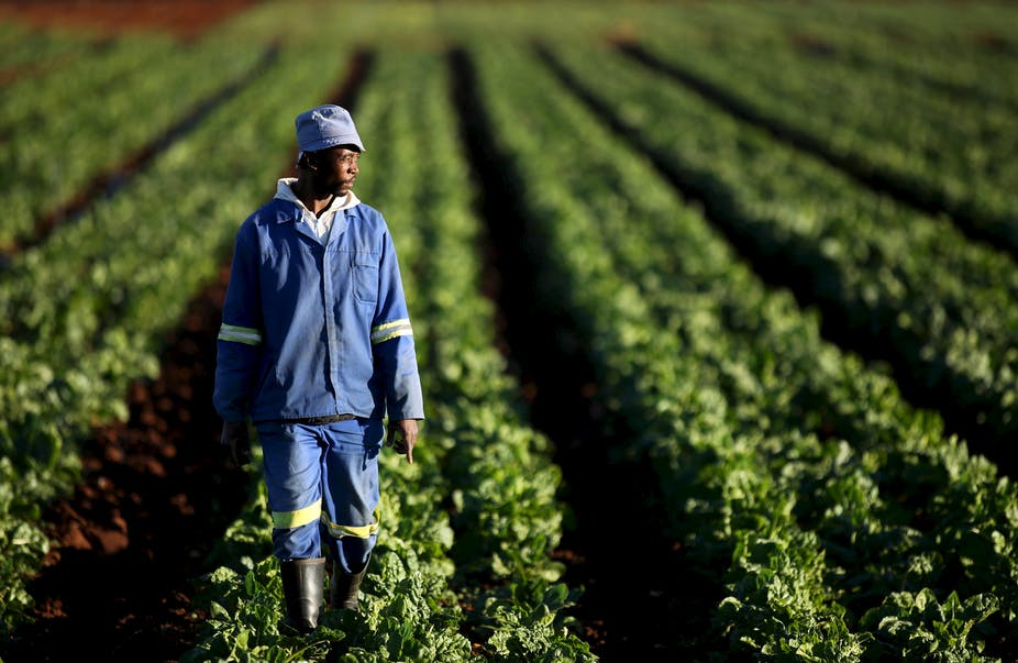 South Africas Land Reform Efforts Lack A Focus On -6006