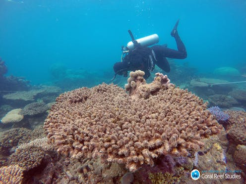 How Much Coral Has Died In The Great Barrier Reef S Worst