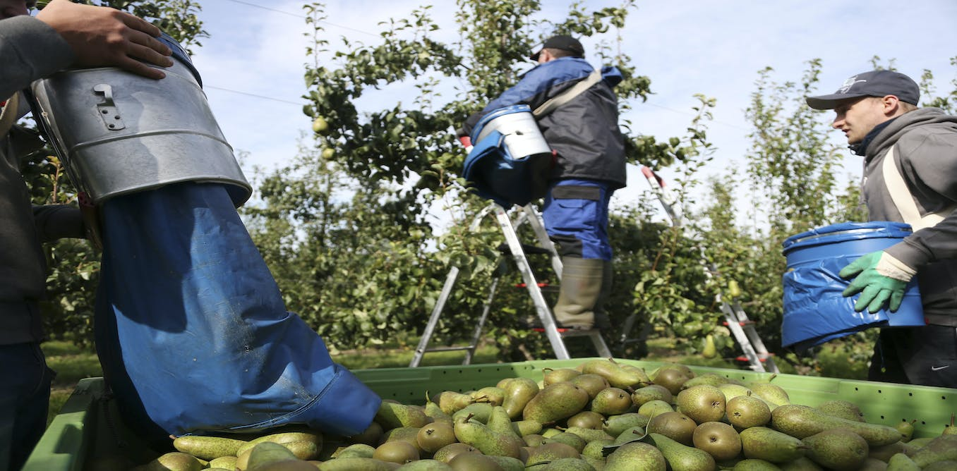 Backpackers are alien tourists in Australia who don't mind picking fruit to pay expenses. The government wants 32.5% tax from them. They decline to work at that rate, and it turns out that they pick 93% of the crops. So production is down 40% now. What's wrong with this picture?