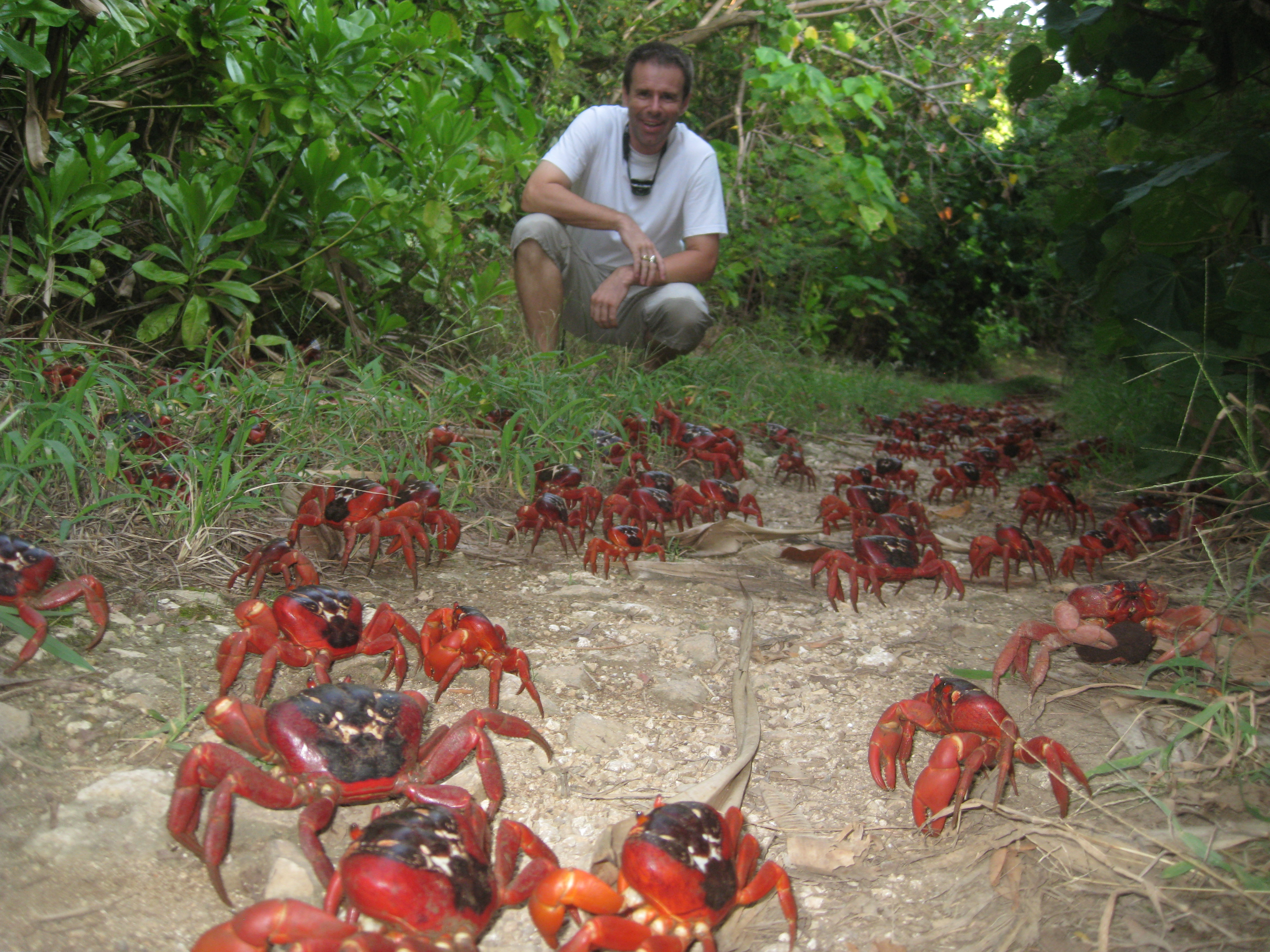 A tiny wasp could save Christmas Island's spectacular red crabs ...
