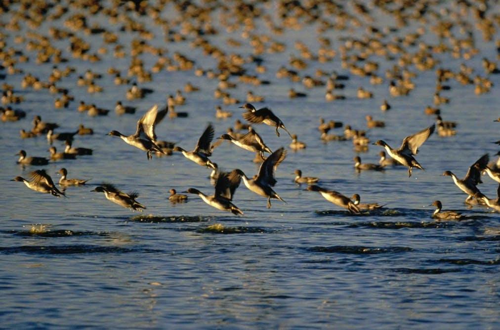 Bird flu: are viruses still in the air?