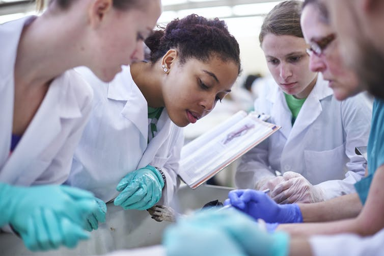 The high cost of pursuing a dream to be a veterinarian