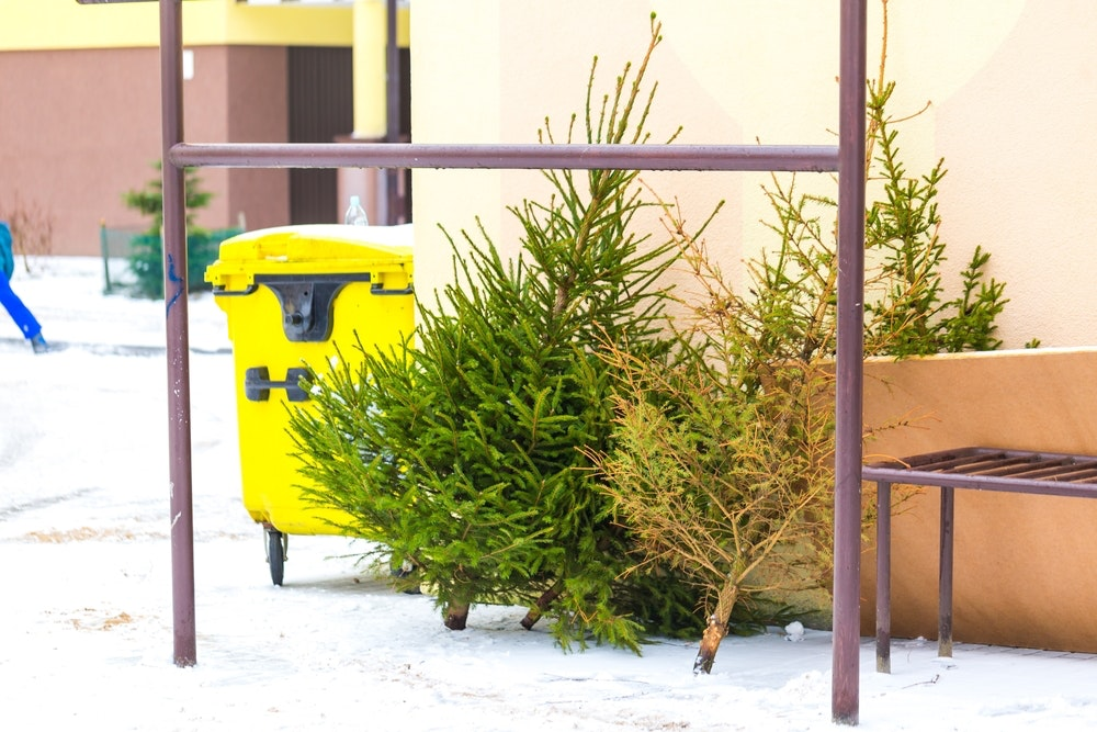 Now Christmas Is Over, What Will You Do With Your Tree? - image 20161219 24310 1ml8d9d.jpg?ixlib=rb 1.1