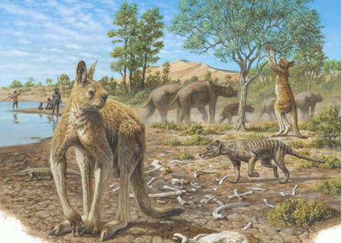 Coexistence of aborigines and mega-fauna, Australia