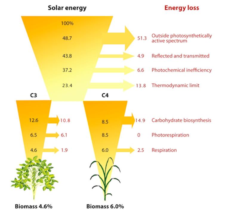 biomass energy 2 essay