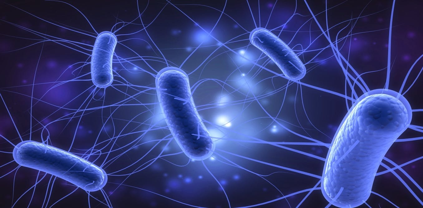 How the brain helps the body fight bacteria