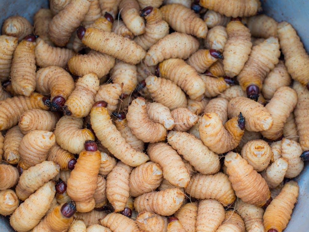 Eating insects has long made sense in Africa  The world must