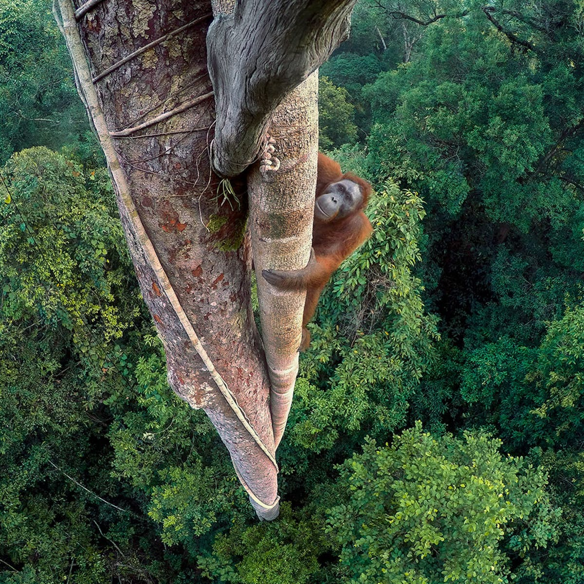 The World S Best Wildlife Photography Reveals A Fragile Beautiful Realm