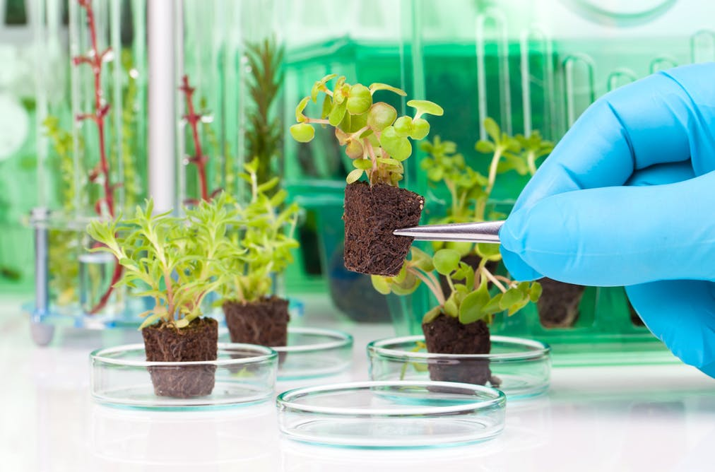 Will rising carbon dioxide levels really boost plant growth?