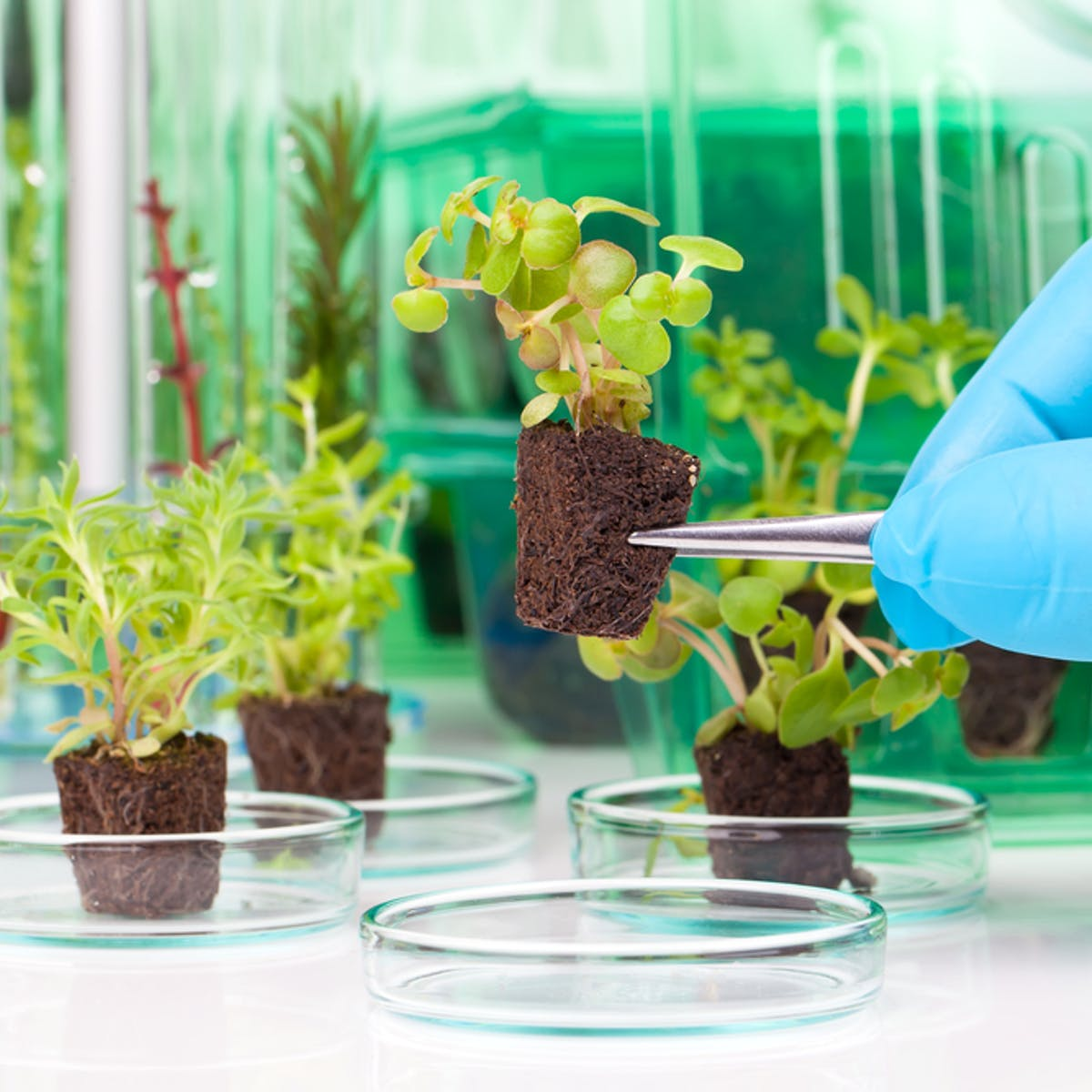 How GM crops can help us to feed a fast-growing world