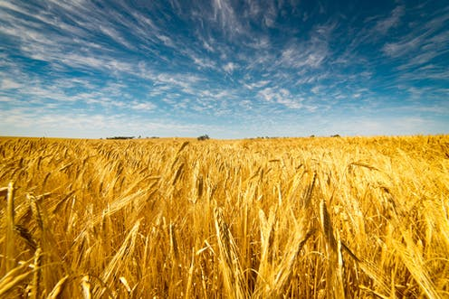 Billion Auto Group >> Changing climate has stalled Australian wheat yields: study