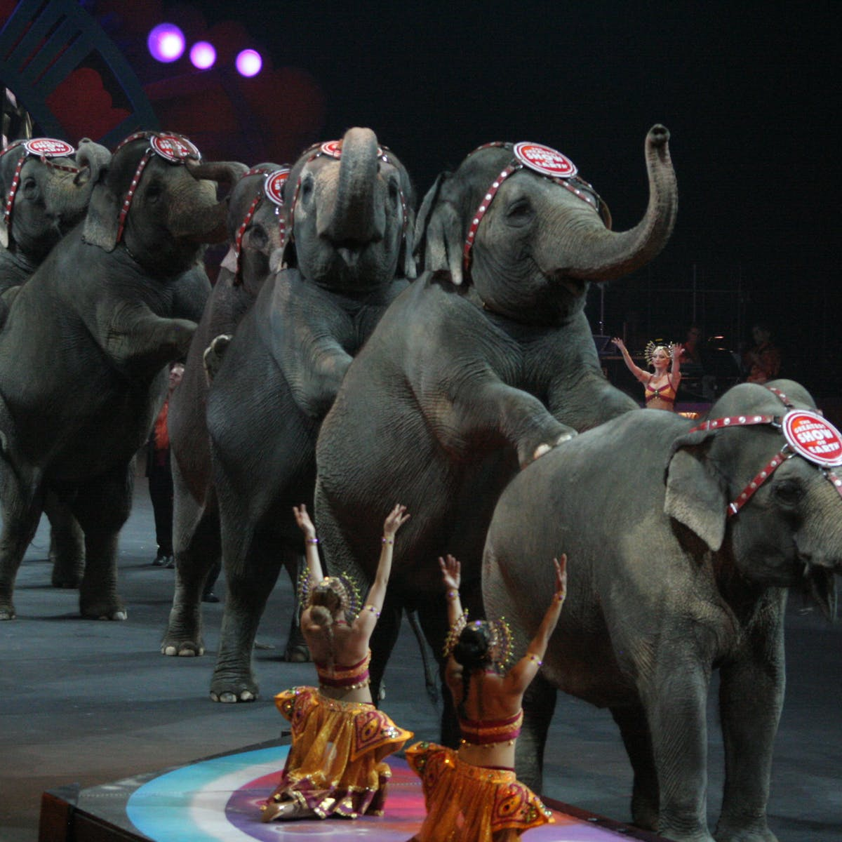 Ringling Bros  Circus shutdown is a distraction from the real issue