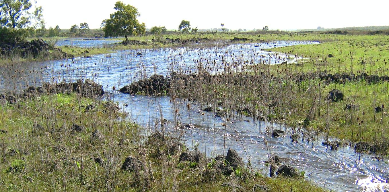 The detective work behind the Budj Bim eel traps World Heritage bid