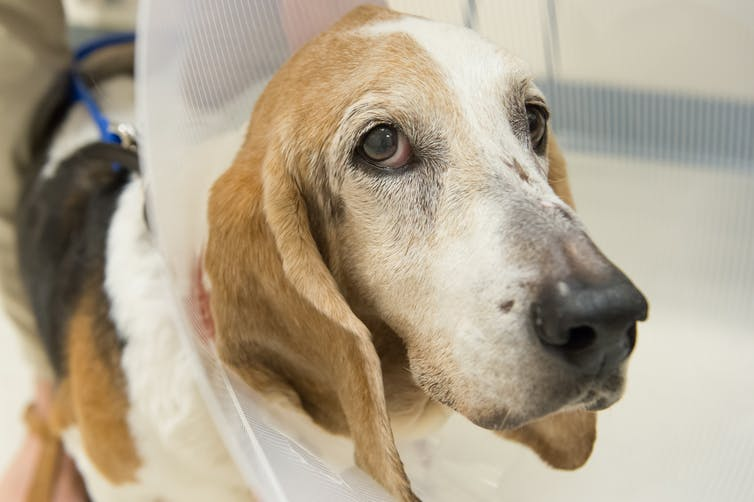dogs helping Cancer Treatment