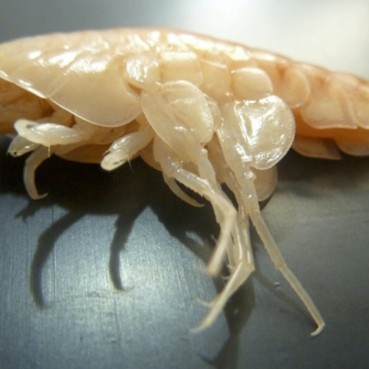 How We Discovered Pollution Poisoned Crustaceans In The