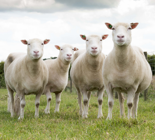 More lessons from Dolly the sheep: Is a clone really born ...