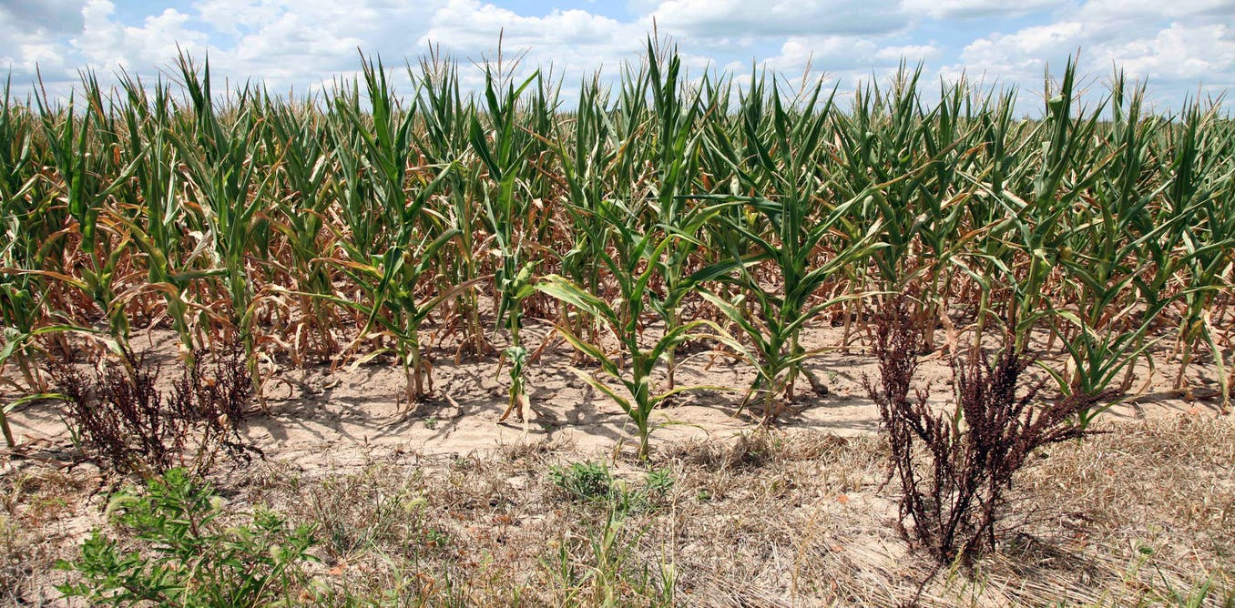 Red state rural America is acting on climate change – without calling it climate change