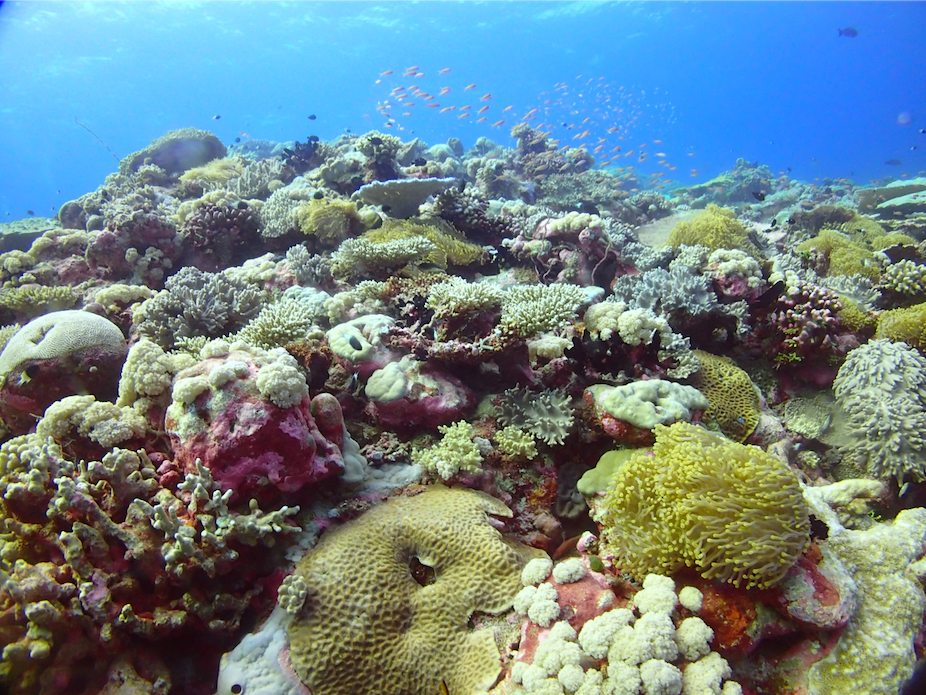 does a new era of bleaching beckon for indian ocean coral reefs