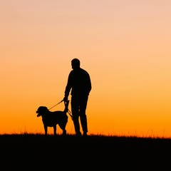 Dogs are a huge part of their owners      routines     which makes their loss even more jarring       Silhouette      via www shutterstock com