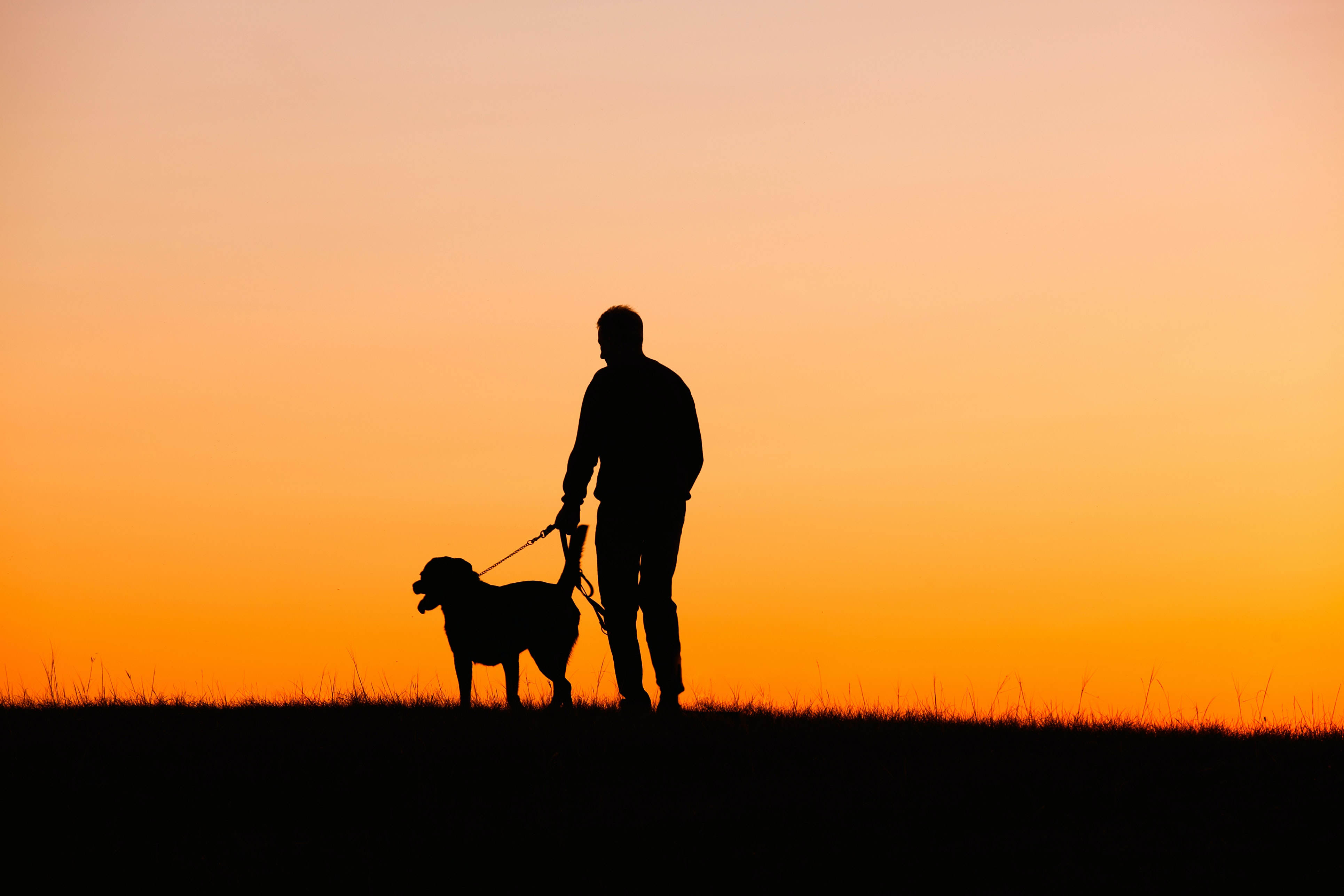 Why grief over loss of pet so intense