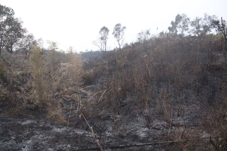 The day after, the forest land cleared and prepared for the next cropping cycle. Mirza Zulfiqur Rahman, Author provided