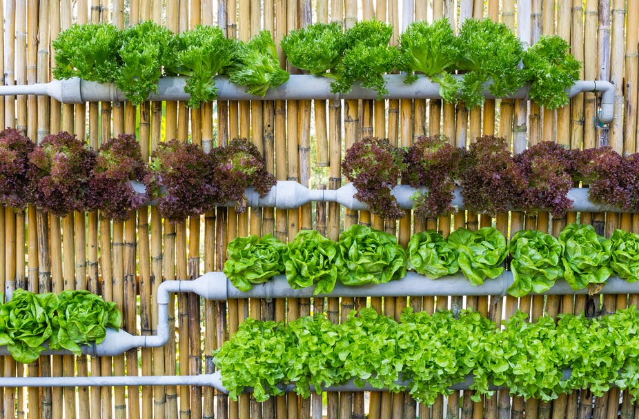 Africa needs its own version of the vertical farm to feed growing cities