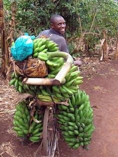 farmer transports bananas to market